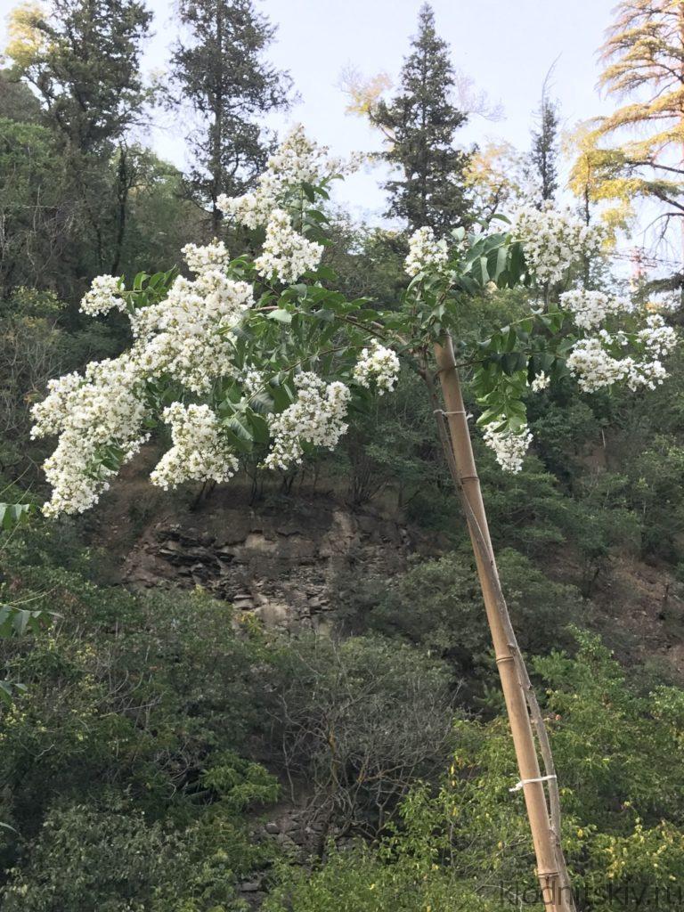 Грузия, Тбилиси (Ботанический сад)