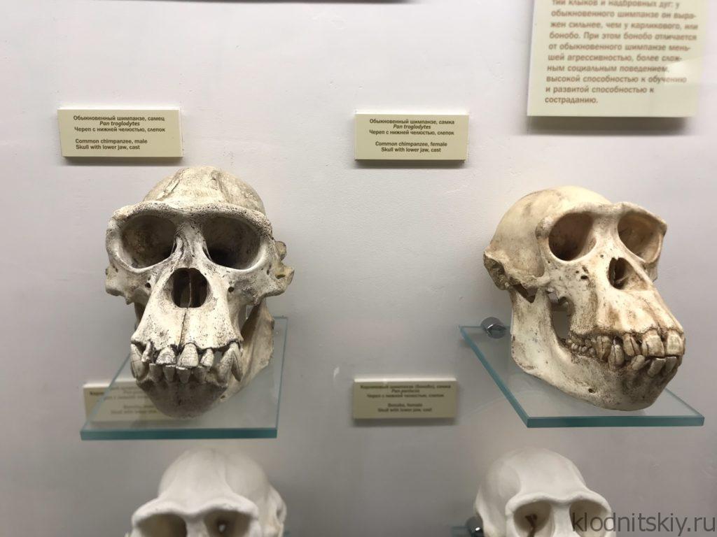 Палеантологический музей в Москве