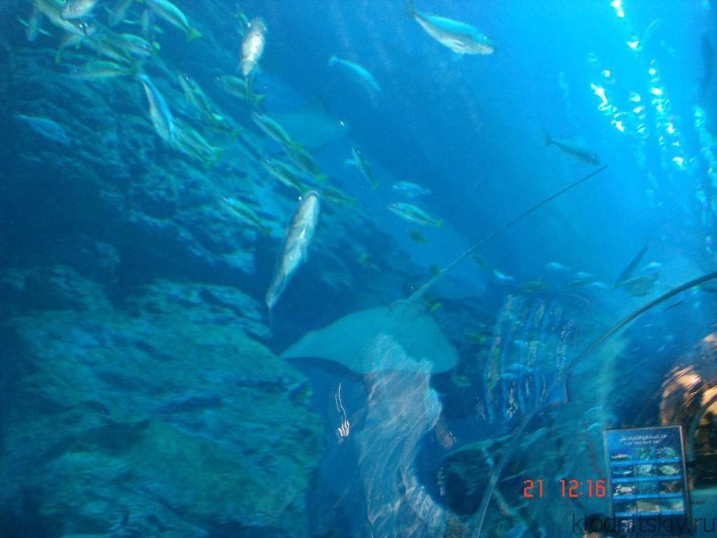 Океанариум, Дубай, ОАЭ