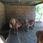 Контактный Зоопарк Майорка, Испания