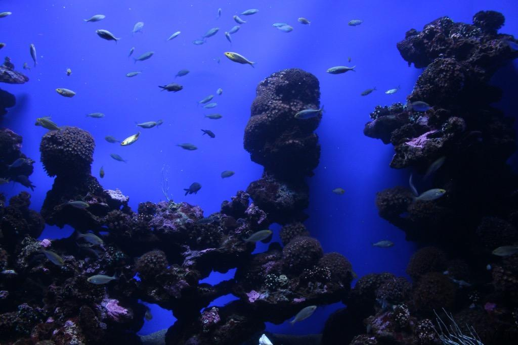 Океанариум, Пальма, Майорка, Испания